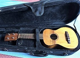 Alvarez ukulele - in case